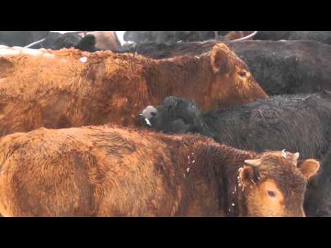 5/7/2016 U.S. Farm Report