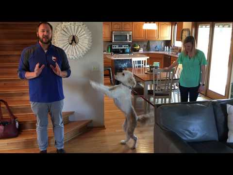 Teaching Honey to Calm Down and Stop Jumping