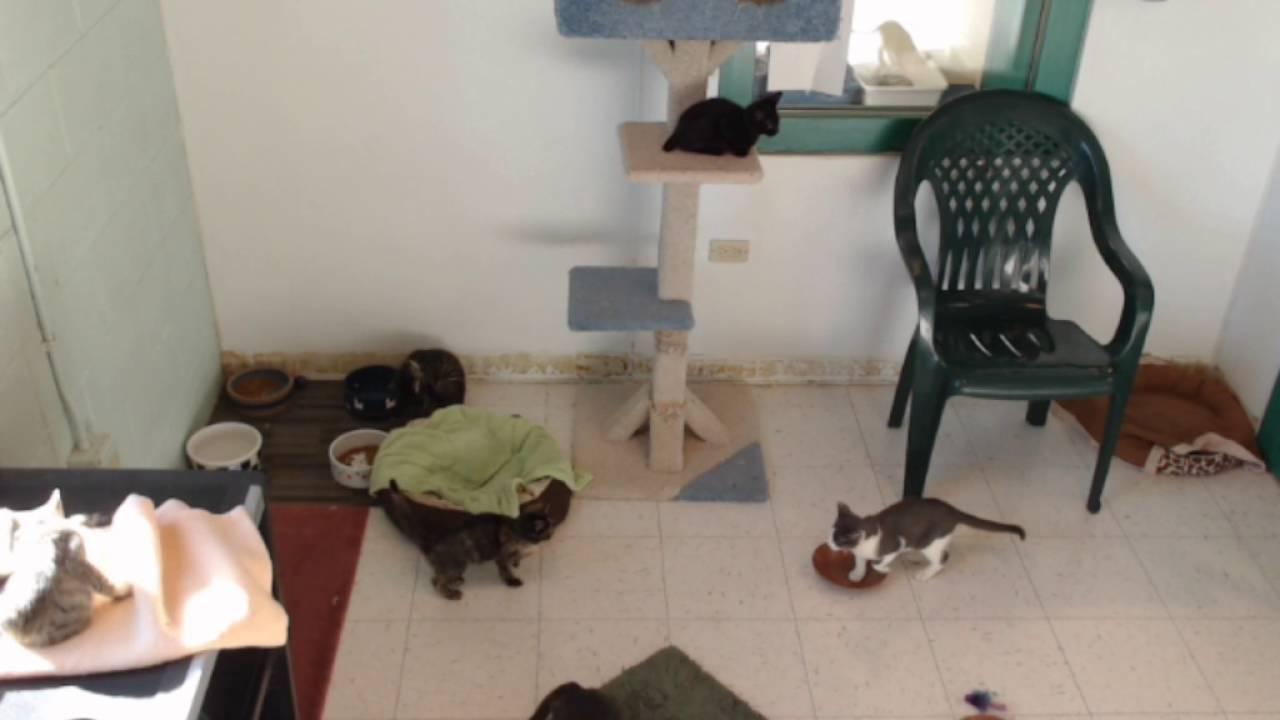 Cat Kitten Live Stream