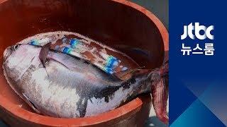 부산서 1m 참다랑어 잡혀…한때 상어 신고 소동