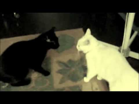 & lolcats - Basement Cat u0026 Ceiling Cat movie trailer - YouTube