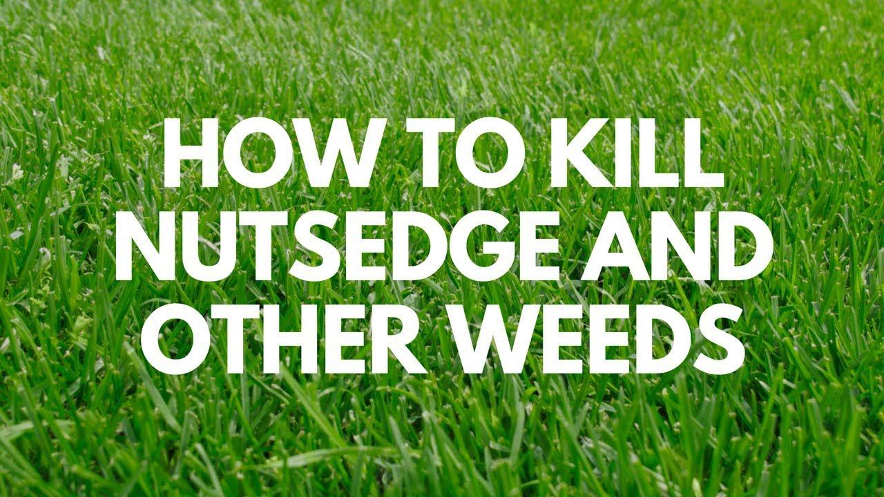 Image Kills Nutsedge Weed Killer Ready-to-Spray