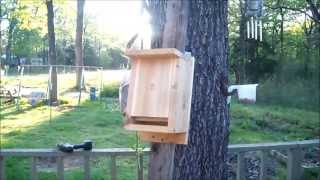 Hang Bat Boxes For Guano Bat Poop