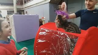 Выставка кошек в Екатеринбурге 04.05.19