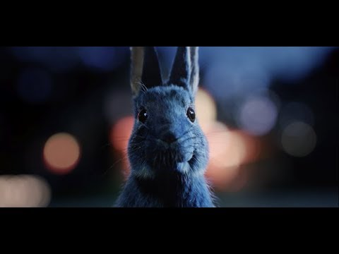 Follow The Rabbit - Priority Tickets to unforgettable live music nationwide| O2