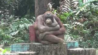Орангутан отжигает в зоопарке Хошимина