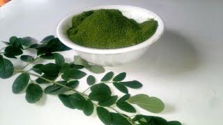Moringa Powder How to make moringa powder for weight loss belly fat Immune boosting tea Benefits