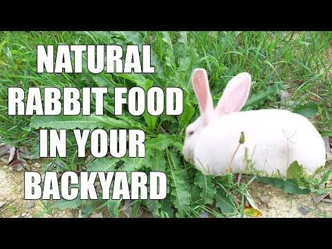 Wild Natural Rabbit Food - What Do Wild Rabbits Eat - Raising Meat Rabbits