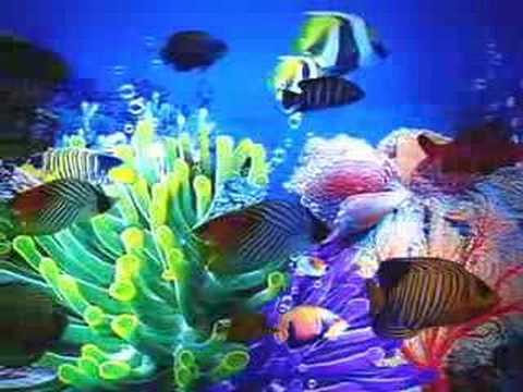 Aquarium Motion Fish Lamp Night Light 12 5 Tropical Fish Youtube