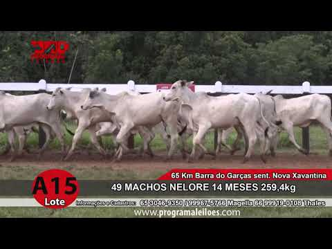 LOTE A15