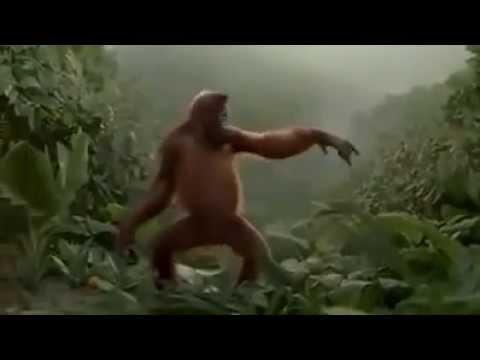Affe tanzt super lustig