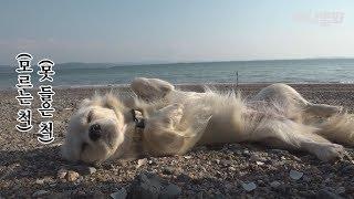 낯선 섬에서 귀여운 강아지를 믿으면 생기는 일 l See What Happens If You Trust A Cute Doggo In A Strange Island..