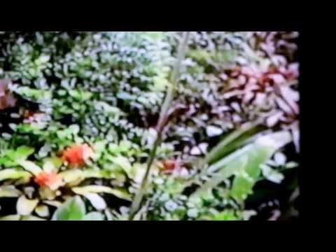 Lankaster Botanical Garden Costa Rica