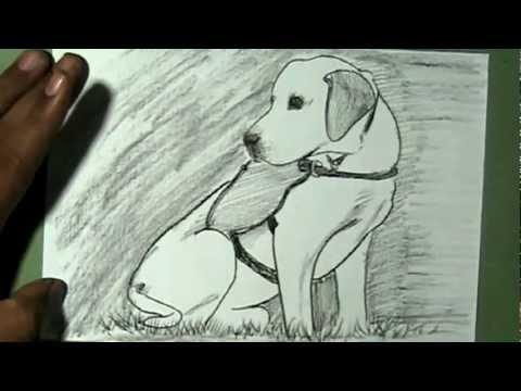 How To Draw Service Labrador Dog Yzarts Yzarts
