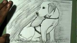 How to draw Service Labrador Dog | YZArts | YZArts
