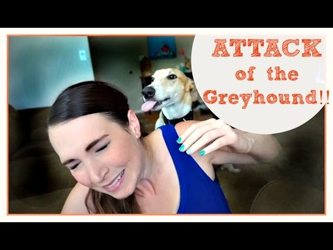 Attack Of The Greyhound | Meet Ralph | MamaKatTV