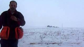 Snow Goose Hunting Preparation British Labrador Retriever