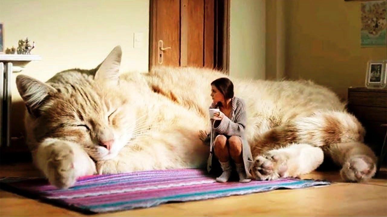 Top Strongest Big Cats