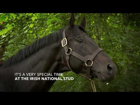 ireland-springs-into-life-at-the-irish-national-stud