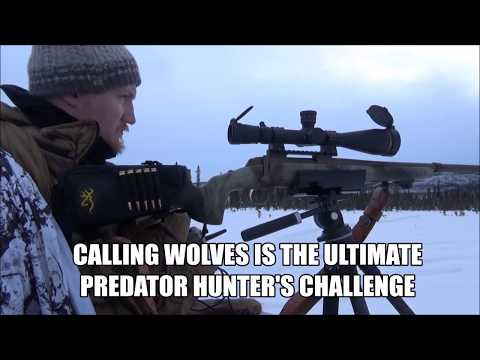 How To Call Wolves