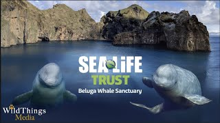 The World's First Beluga Whale Sanctuary! To learn more: https://belugasanctuary.sealifetrust.org