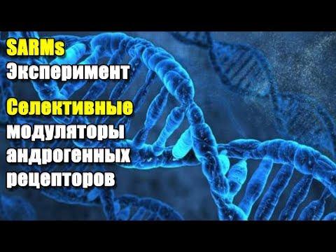 SARMs ЭКСПЕРИМЕНТ | Селективный модулятор андрогеновых рецепторов