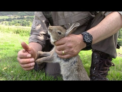 How to humanely dispatch a rabbit - YouTube