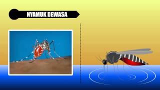 Video Infografis Penyebaran dan Siklus Hidup Nyamuk
