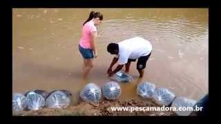 SAAE realiza soltura de 8.000 alevinos no Rio São Francisco em Piumhi-MG