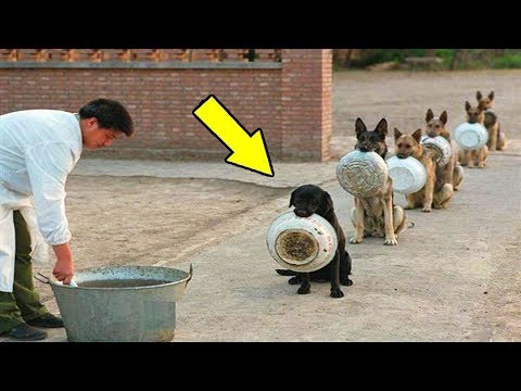 এর চেয়ে বুদ্ধিমান কুকুর আপনি আর কোথাও দেখতে পাবেন না || Best Disciplined Dogs in the world