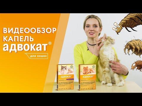 Вопрос: Капли на холку при отодекозе у кошки – какие лучше?