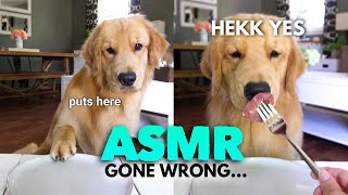 asmr-dog-reviewing-different-types-of-food-tucker-taste-test-11