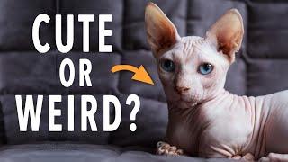 3 Strange Hairless Cat Breeds