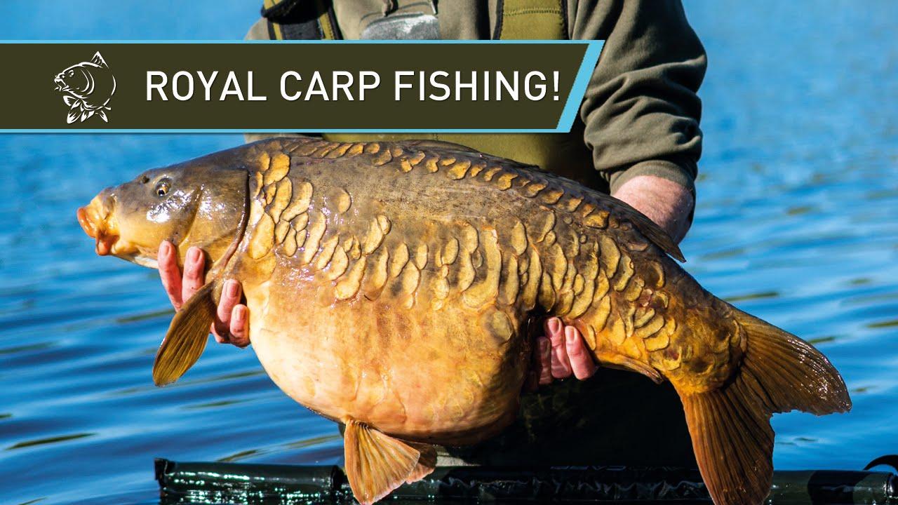ROYAL CARP FISHING