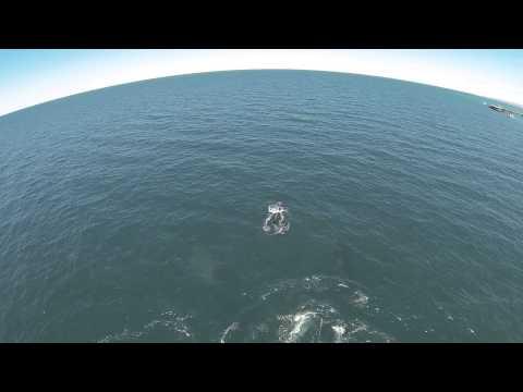 Western Australia - Exmouth -  Navy Pier (whales)