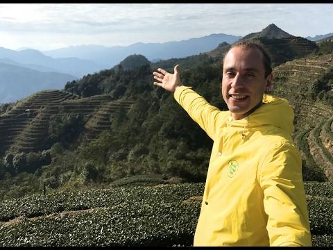 Логика выбора китайского чая. Как сделать первый заказ