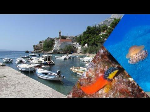 Pisak, Croatia 2015 Underwater videos
