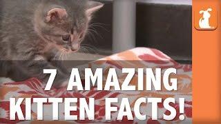 7 Amazing Kitten Facts