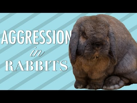 Aggression In Rabbits