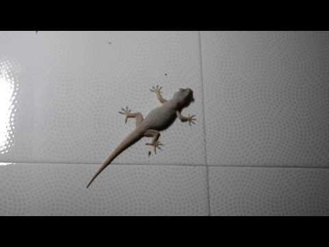 Night life lizards in Amritsar - India