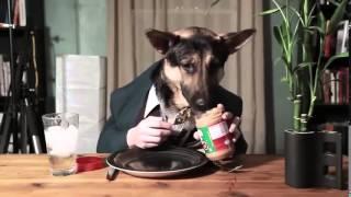 Приколы  где люди заразительно ржут  Видео про смешных собак и людей  Самые смешные видео приколы