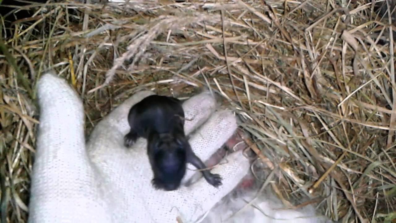 крольчата новорожденные