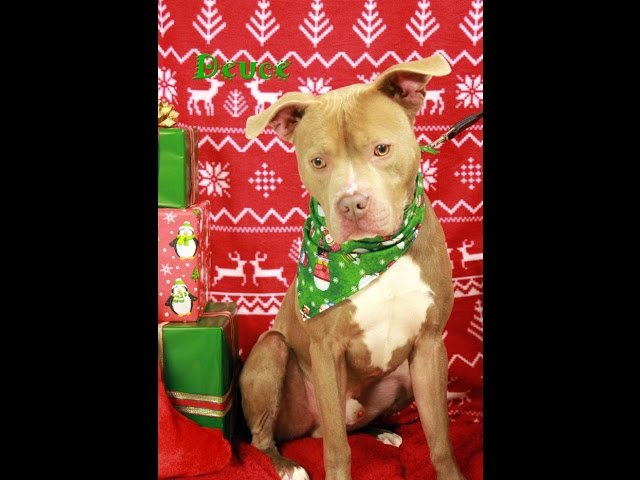 ADOPTED!! Deuce @ Beacon Animal Rescue