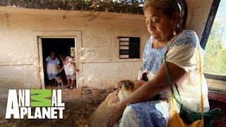 dr-jeff-es-el-primer-veterinario-en-visitar-el-pueblo-maya-dr-jeff-veterinario-animal-planet
