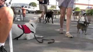 Robert Dollwet On World's Dog Trainer (2 Of 2 )