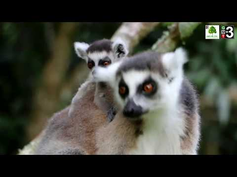 GMT+3 Great Madagascar Tours   Tour operator in Madagascar
