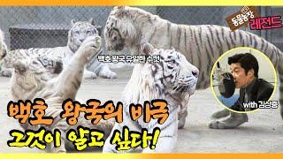 Assault case that shook it! Kim Sangjoong Narration Full Version Review I TV Animal Farm