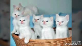 Картинки котята ми - ми няха класс !
