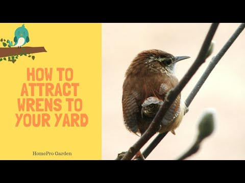 How To Attract Wrens To Your Backyard And Garden