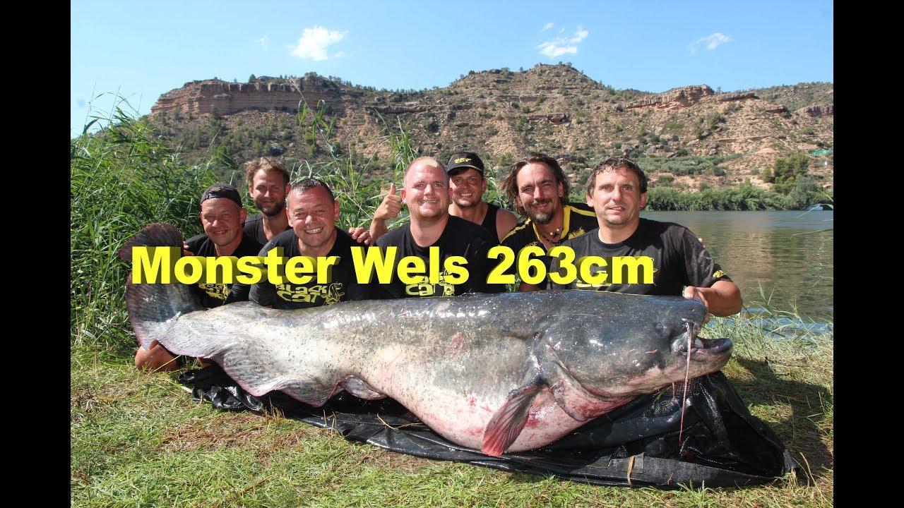 Download Monster Wels 263cm - 120 Kilo, Monster Catfish 8,63 Feet - 264.55 Pounds, Welsangeln, Wallerangeln